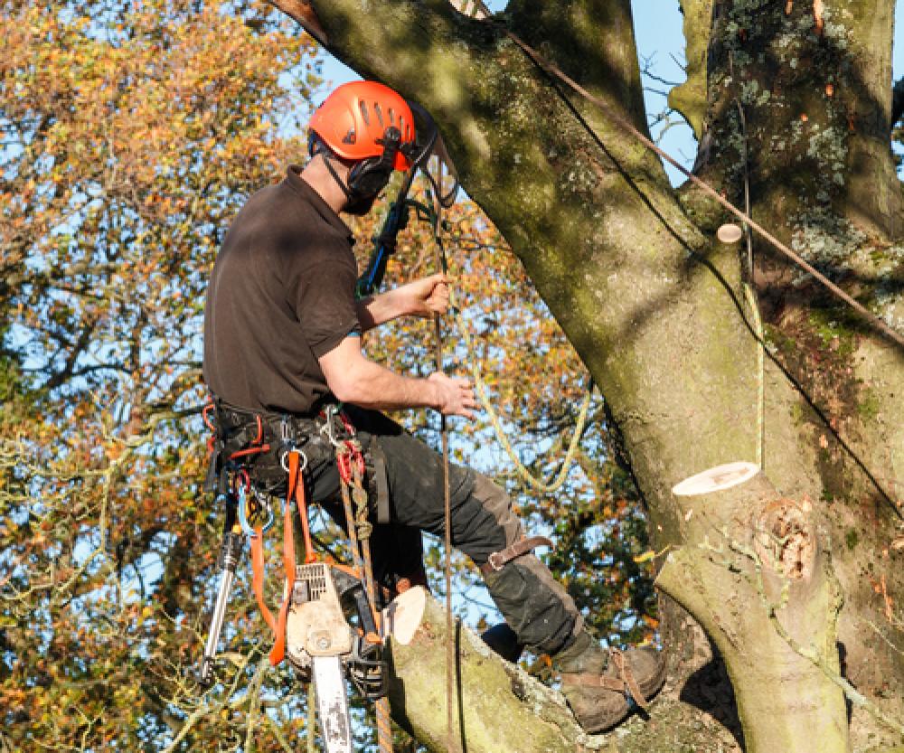 Ben\'s Tree & Garden Services - Look Local